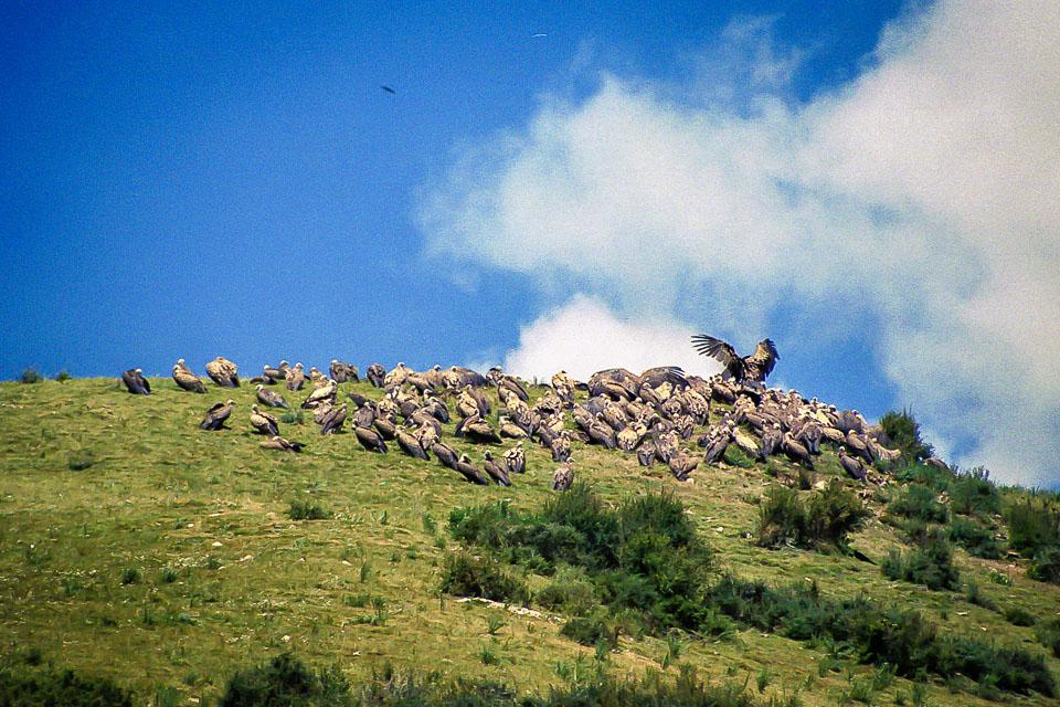 Tibet06---R21a---035.jpg